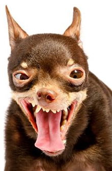 Taking Care of Your Dog When You Are Away